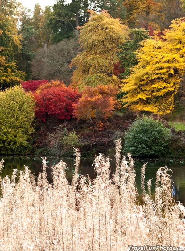 Autumn at The Lake - Hascombe, England