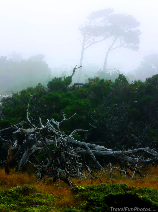 Foggy Day at The Beach in Monterey, California – USA