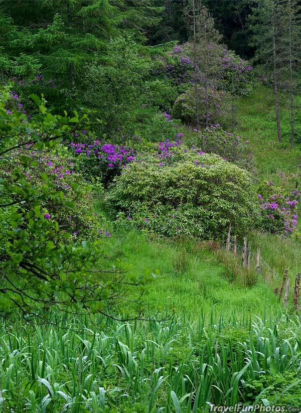 green lush Ireland Deer Park