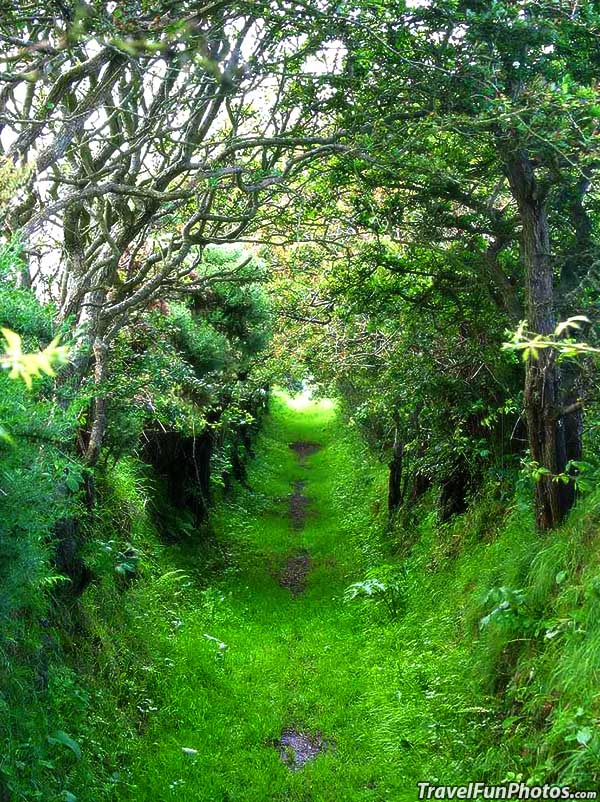Shady Trail Through a Green Tunnel in Ireland